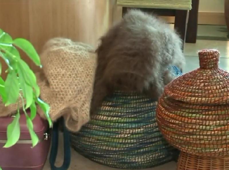 セーターからテディベアまで・・・犬の毛で作った毛糸で編み物をする女性が話題に