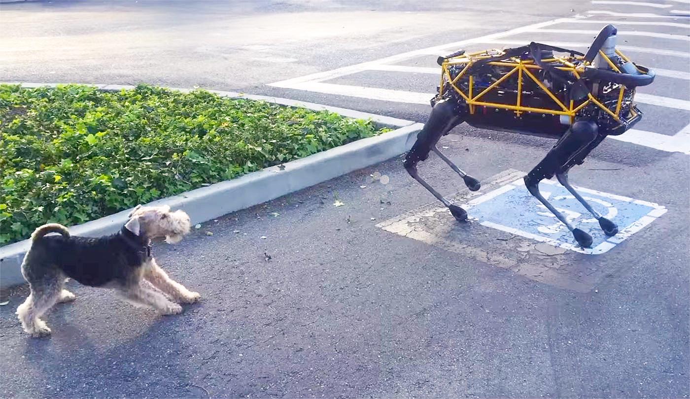 Esto es lo que pasa cuando un perro robótico y uno de verdad se encuentran
