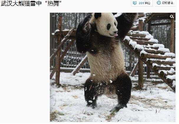 中国のパンダが雪に大興奮してはしゃぐ写真が癒されると話題 「らんま1/2の親父www」
