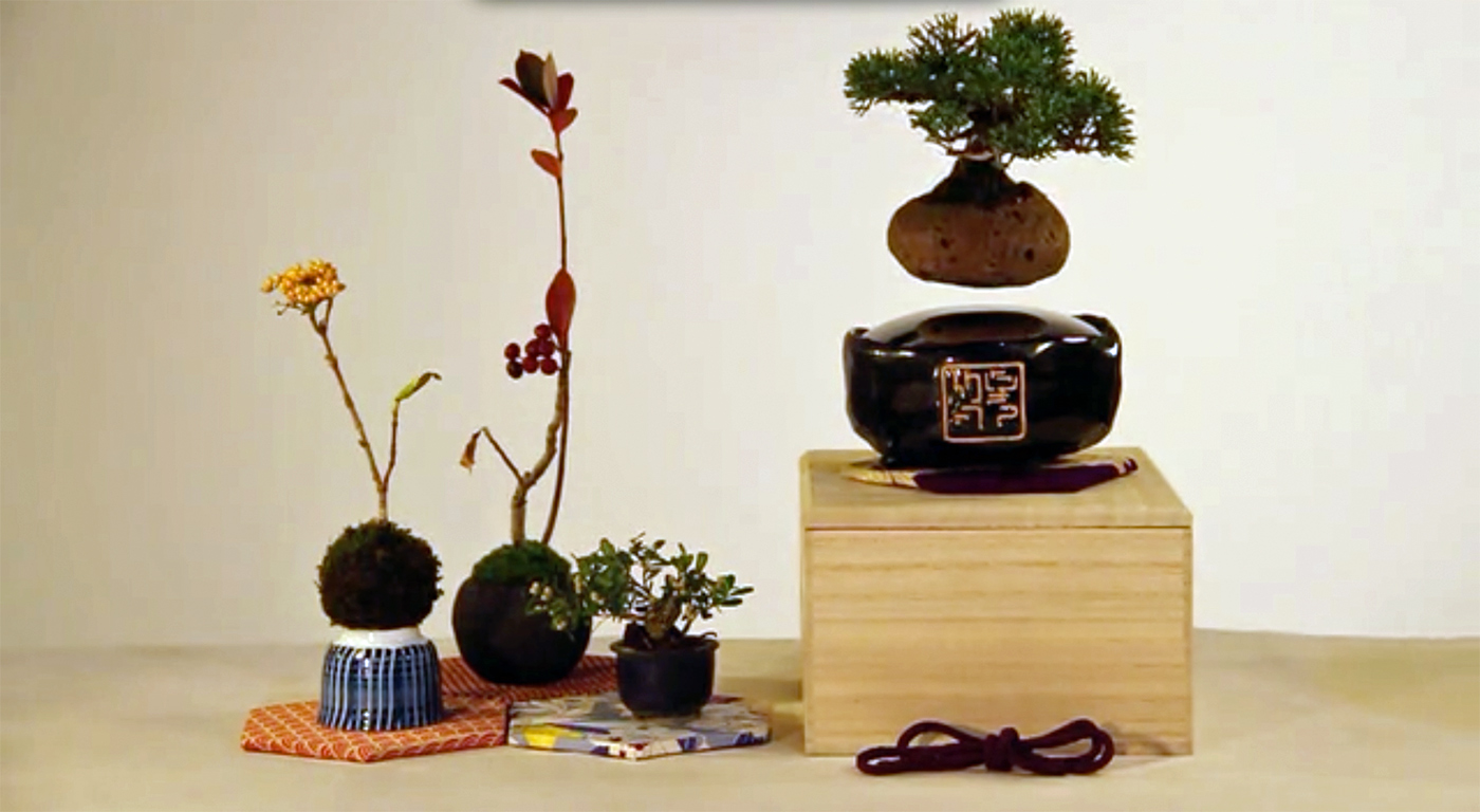 Floating bonsai trees are better than floating speakers for Plante en levitation