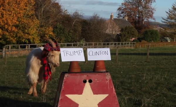 米大統領選開票スタート! 占い師のヤギが結果を大胆予想【動画】