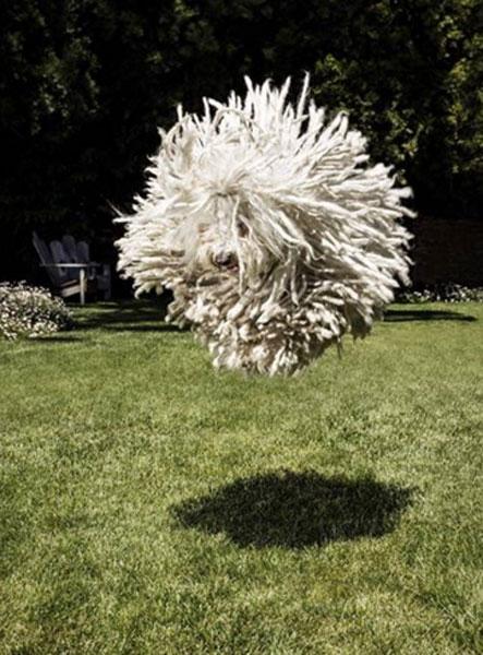 マーク・ザッカーバーグの愛犬が衝撃すぎると話題に 「あのBECKのジャケットみたいな犬はなに?」