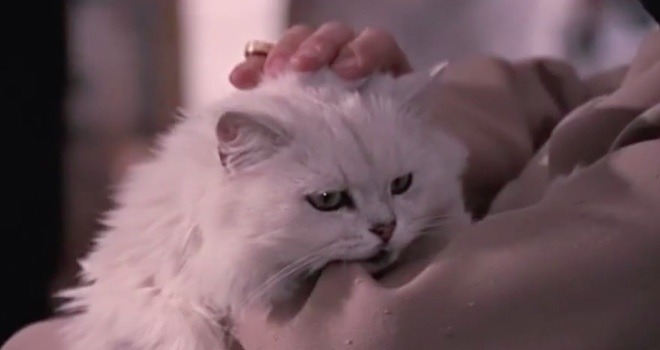 cats in movies This Supercut of Cats in Movies Will Help Your Humpday (VIDEO)