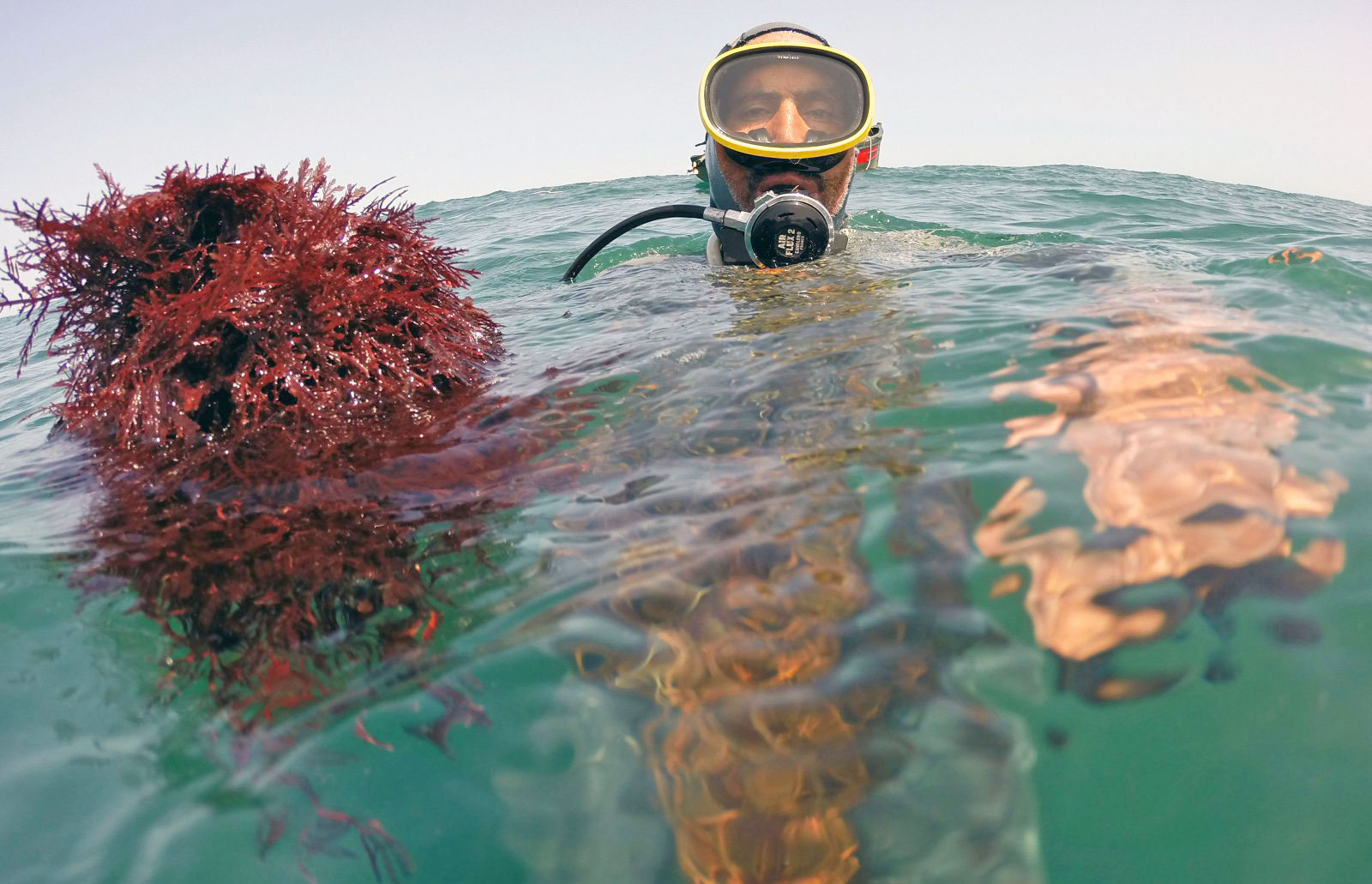 photo image Seaweed could be the key to long-lasting electric car batteries