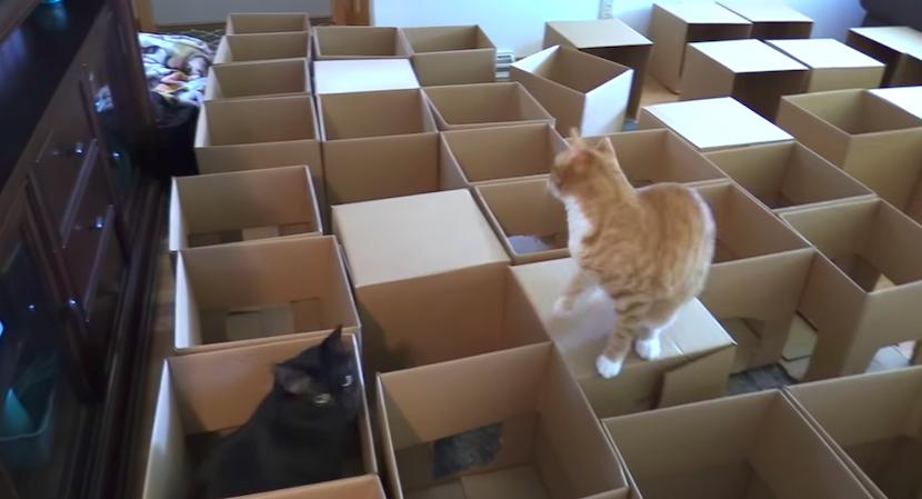 Traum für Katzen: DIY-Labyrinth aus 50 Kartons