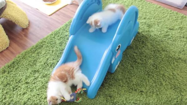子ニャンコがゾウの滑り台で遊んでて可愛すぎるwww【動画】
