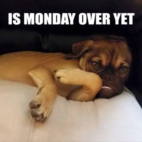 grumpy earl dog meme pic