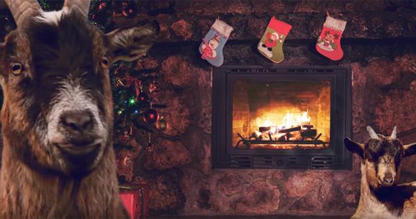 ヤギが歌うクリスマスアルバムが発売、意味不明すぎると話題にwww【動画】