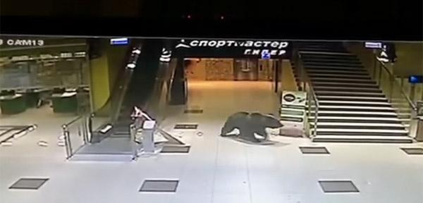 巨大クマが深夜のショッピングモールで大暴れ!ついに軍隊も出動【動画】