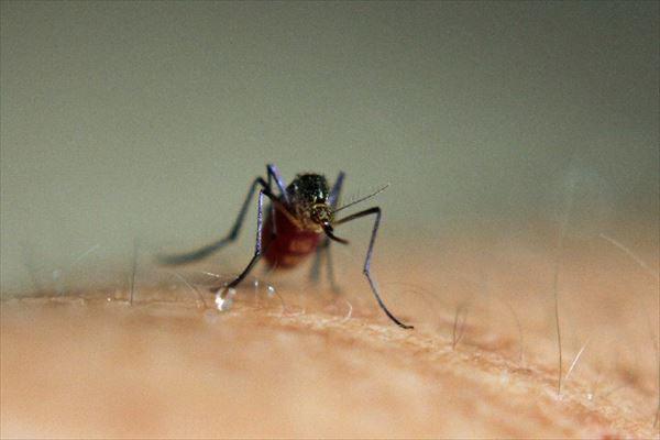 そうだったのか!蚊に刺されまくる人のタイプとその理由が明らかに!?