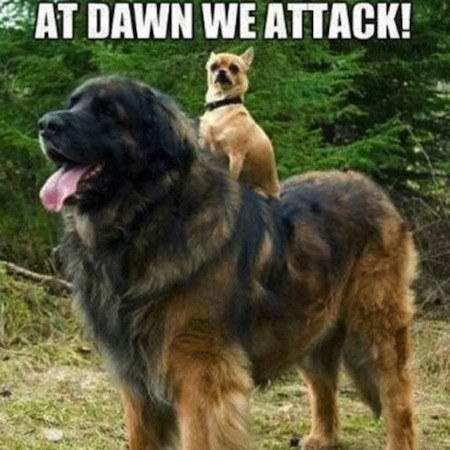 dogs sitting on dogs, at dawn we attack dogs