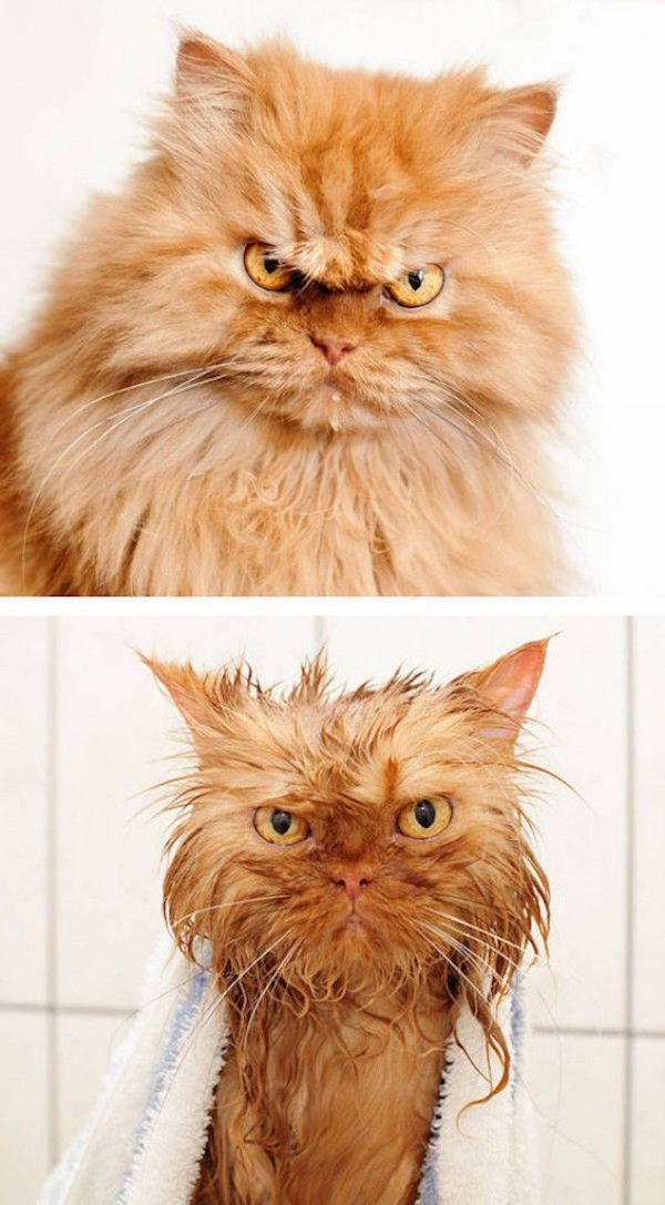 Pets Before And After Bath