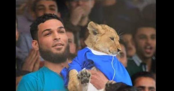 生後2ヶ月(もうすぐ猛獣)の子ライオンがサッカー観戦してる!観客も大喜び【動画】