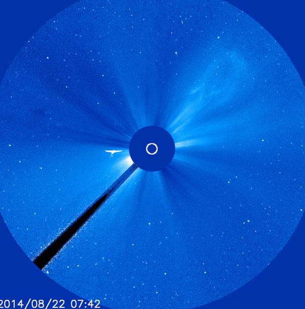 太陽周辺で観測された「火の鳥」にネットユーザー大興奮