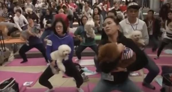 犬と一緒にヨガ…だと? 270人&270匹が参加する「ドッグヨガ」がカオス状態www【動画】