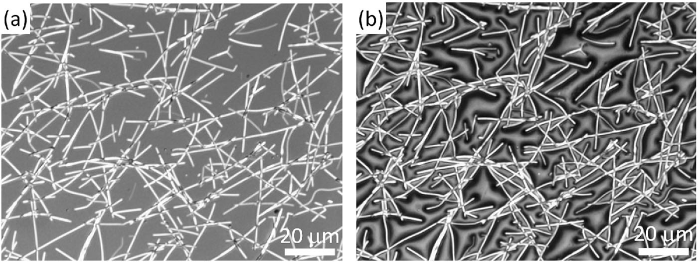 Nanowires could bring 'tunable' privacy glass to the masses