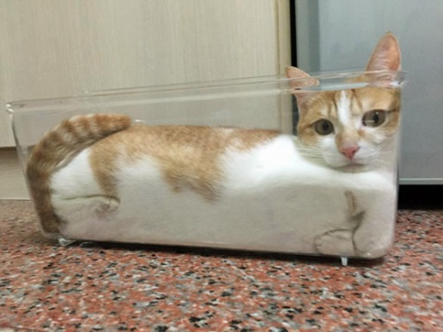 cats are liquid, liquid cat, cat in bowl