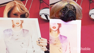 Doug the Pug as Taylor Swift