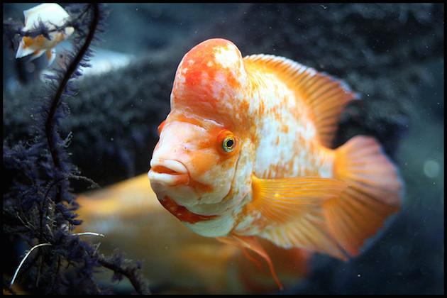 Menschliche Aufmerksamkeitsspanne jetzt eine Sekunde geringer als die von Goldfischen