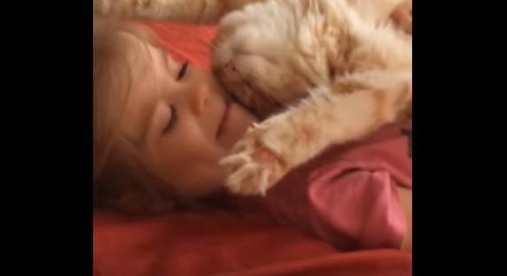 大好きな女の子のおなかの上で仰向け&無防備すぎる爆睡姿をさらす子ニャンコが可愛すぎる【動画】