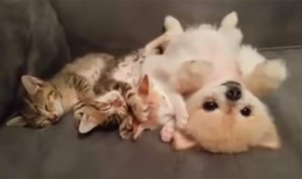 子猫が隣で寝てるから、気を遣って動かない子犬が優し可愛すぎる【動画】