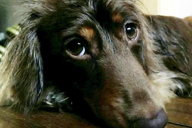 Rolo the naughty dog