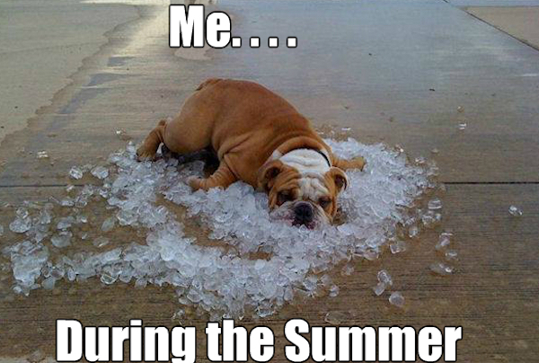 hilarious summer photos, summer fail photos, funny summer photos