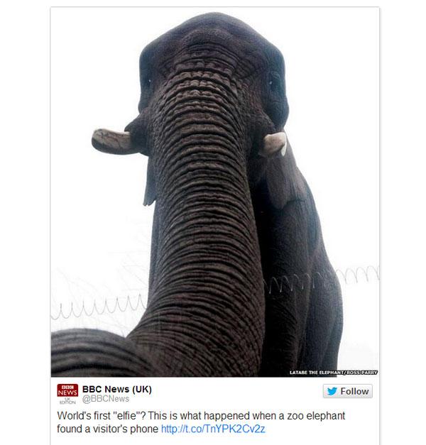 たぶん世界初 ゾウによる奇跡の自撮り画像がネット上で拡散、話題に