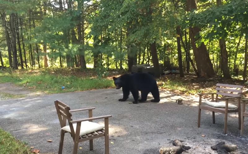 もしクマと遭遇したら? 追い払う様子を一部始終撮影した映像が話題に