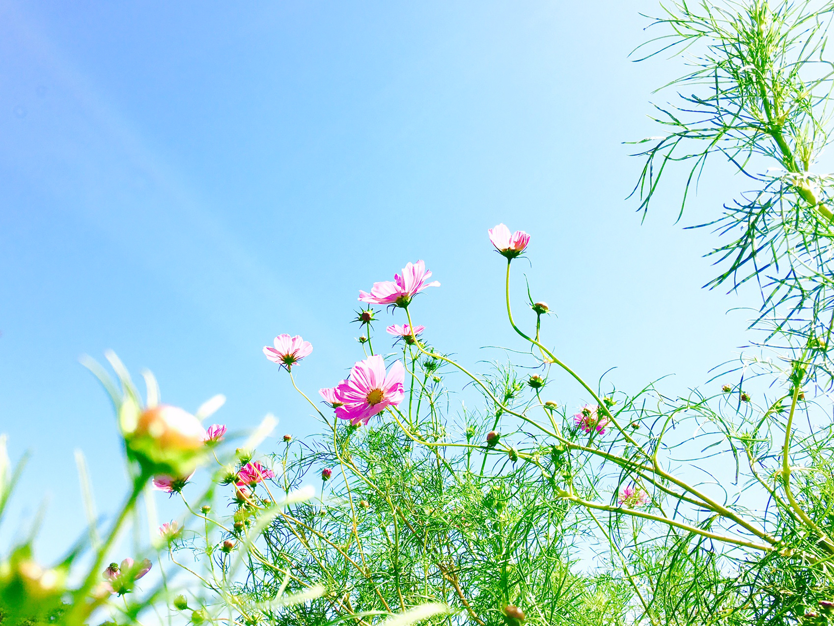 02 flower04