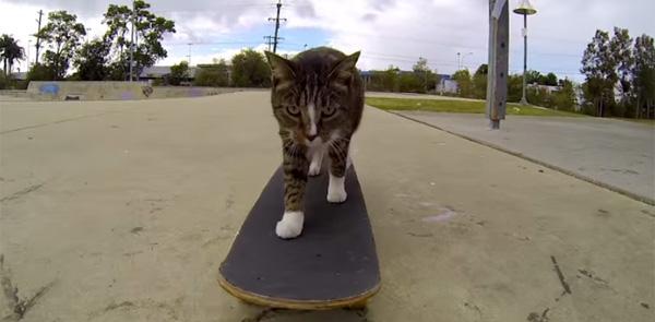 華麗なスケボー技を披露する天才ネコが可愛すぎるとネット上で話題に【動画】