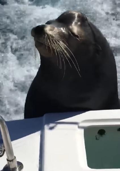 漁師のボートにカワイイ来客現る【動画】