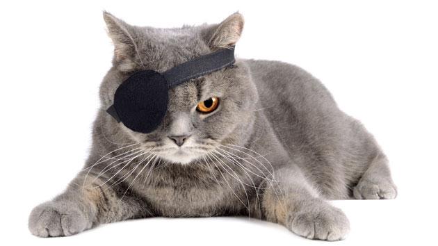 pirate-cat-ealisa-getty.jpg