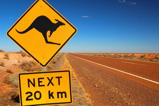 「自動運転車が苦手なものはカンガルー」ボルボ・オーストラリアの技術マネージャーが語る