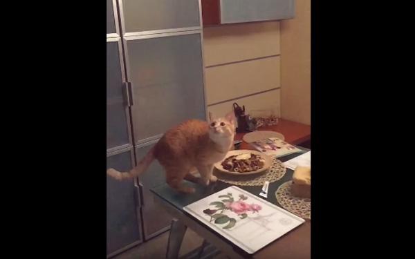 これぞ飛びネコ!ハエを捕まえようと跳躍するネコちゃんの躍動感が半端ねえ!【動画】