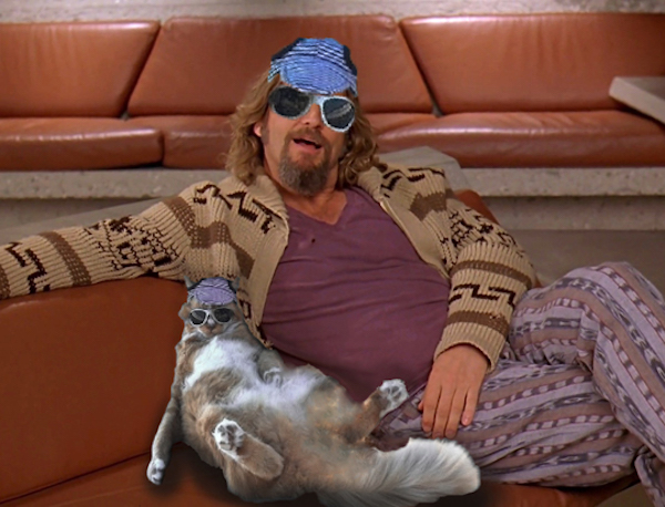 Super Chill Cat With Sunglasses Gets Thrown Into A Super Cool Photoshop Battle
