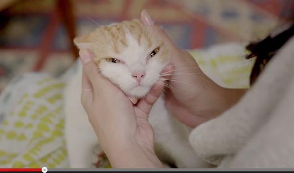 猫も心配してるニャン お疲れ気味のご主人をそっと見守る猫が可愛すぎると話題