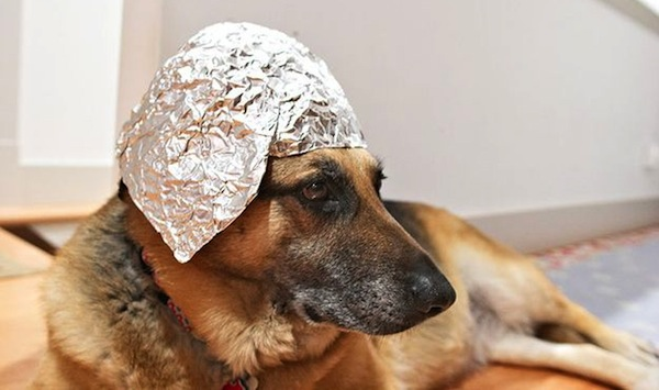 drinking toasts to make everyone love you, funny drinking toasts, dog tin foil hat