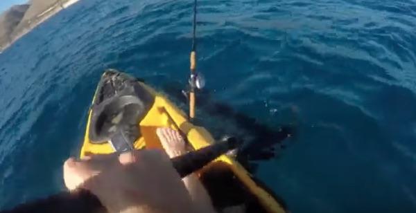 恐怖!船にヘッドバッド攻撃を繰り返すしつこいサメが恐すぎる【動画】