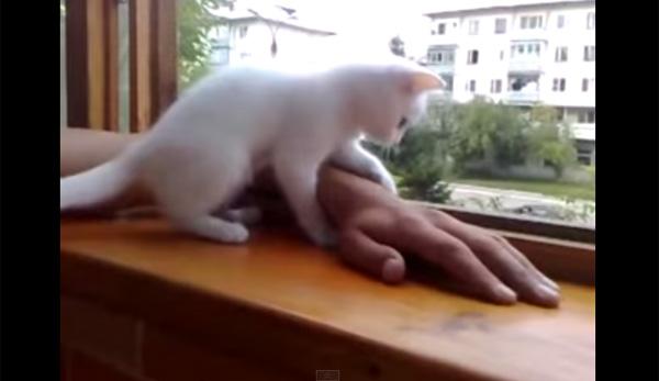 「大変にゃ!大変にゃ!」飼い主を思いすぎる優しい子猫が可愛い 【動画】