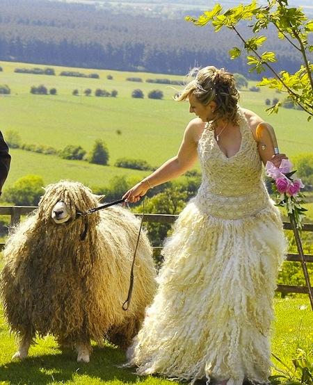 http://o.aolcdn.com/hss/storage/midas/d0891e44345de016eede88613663bb83/200628612/sheep-wedding-dress.jpg