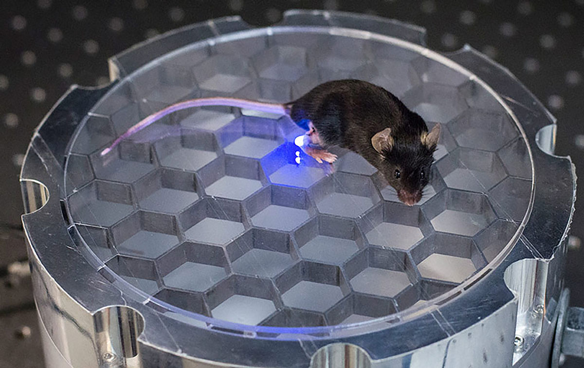 Scientists stimulate mouse brains with wireless 'charger'