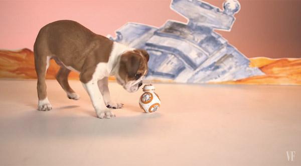 ワンコたちの目の前に『スター・ウォーズ』の最新ドロイド「BB-8」を転がしてみた【動画】