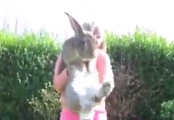 恐怖、巨大ウサギ軍団が発見される!年間ニンジン2000本とリンゴ700個を喰らう