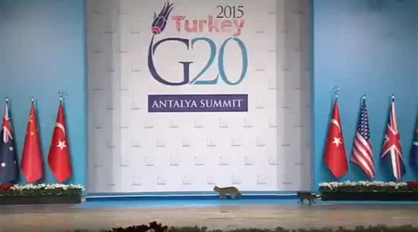 ニャンと!「G20サミット」に3匹のネコさんが乱入 「G20じゃなくてG21だったww」【動画】