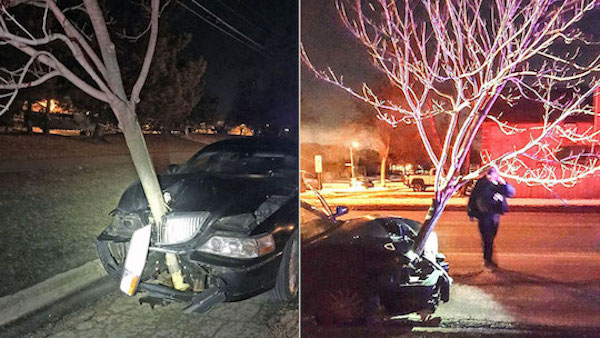 woman caught with 15-foot tree stuck in hood of car