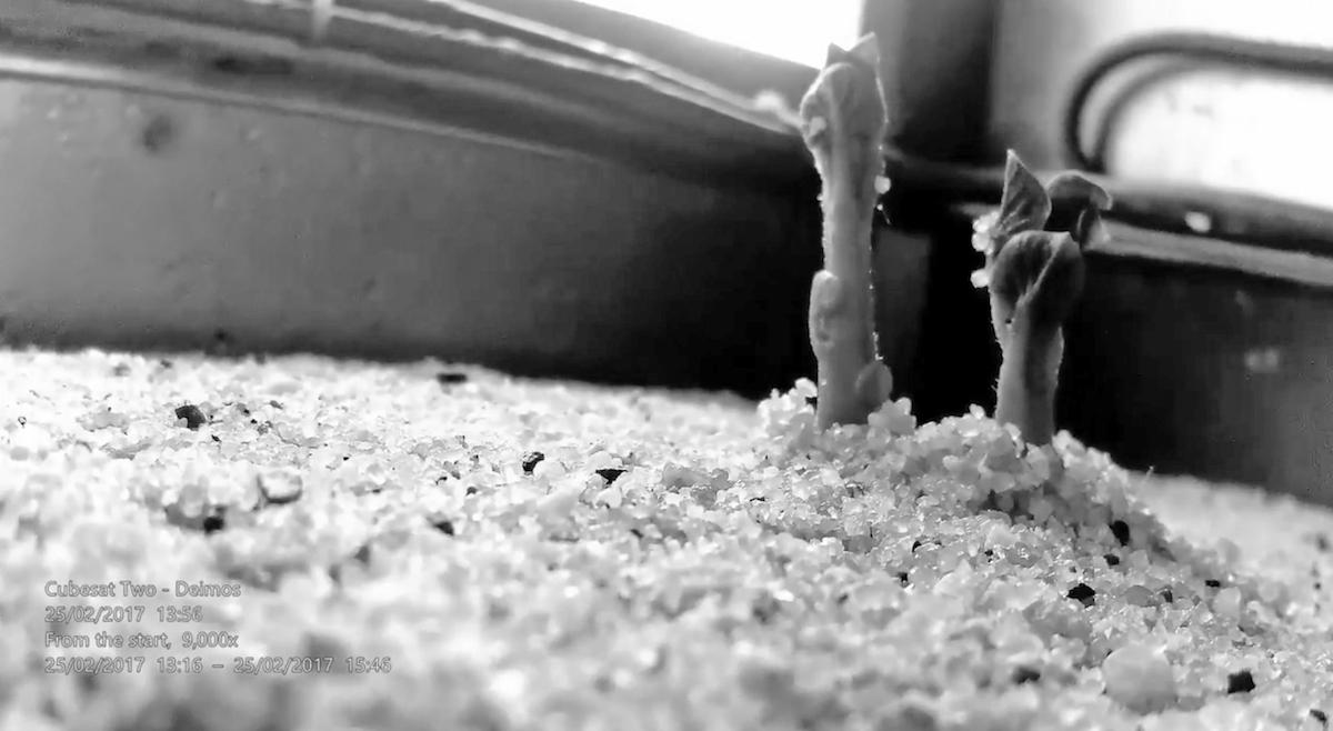 Tranquilo: podremos cultivar patatas en Marte