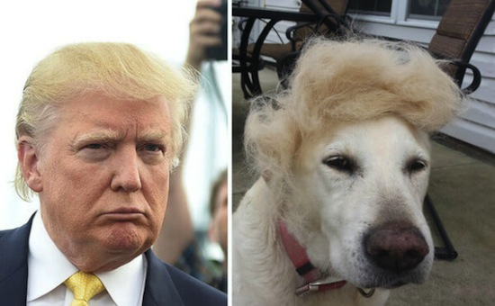 The Very Best Of What The Internet Has Done To Donald ...