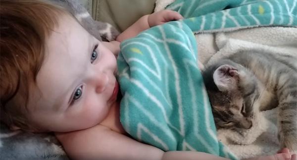 赤ちゃんと一緒にお昼寝する子ニャンコが可愛すぎるwww【動画】