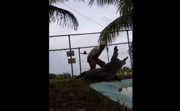 「ワニの街」フロリダで2.7メートルのクロコダイルが人間に食いかかる!【動画】